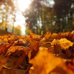 Create Better Wellbeing this Fall - October Sage & Fettle Ayurveda Newsletter